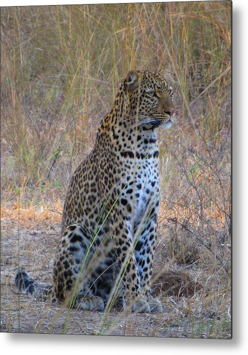 Africa Metal Print featuring the photograph I've Been Spotted by Scott and Rebecca Rothney