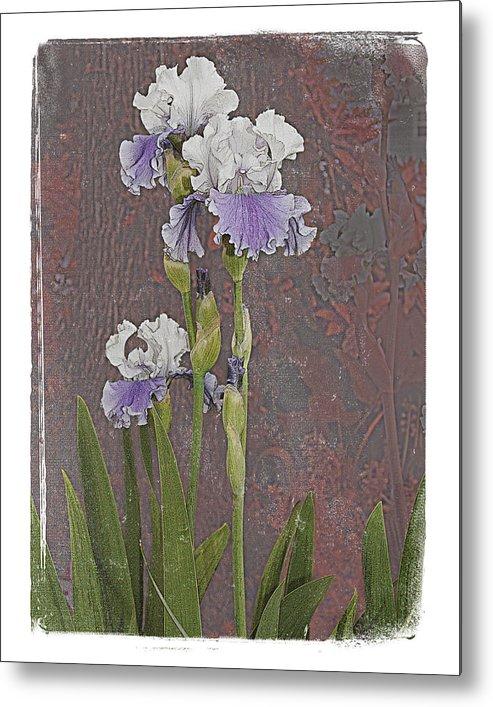 Flowers Metal Print featuring the photograph Iris 3 by Inesa Kayuta