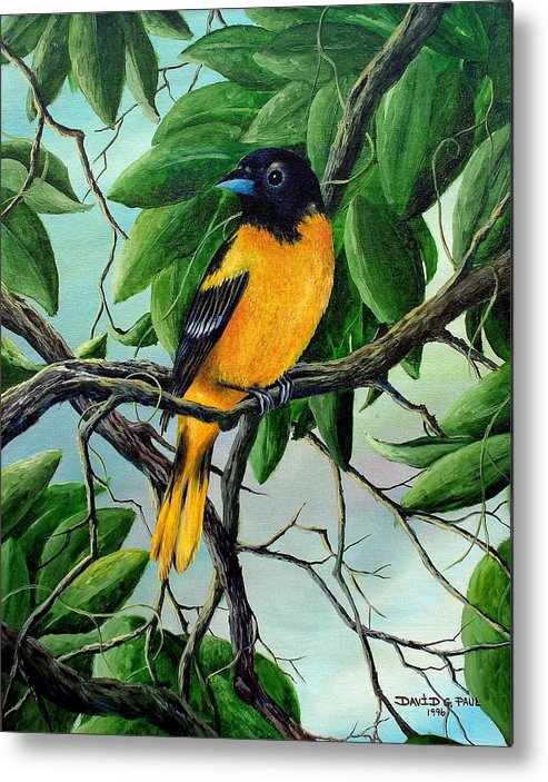 Oriole Metal Print featuring the painting Northern Oriole by David G Paul
