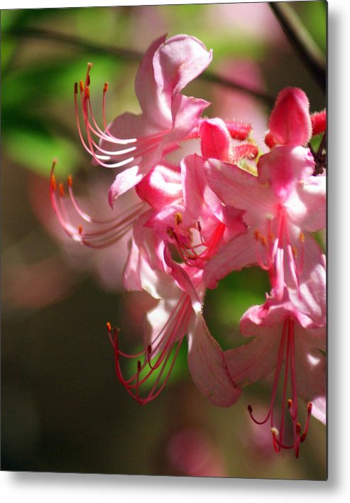 Flowers Metal Print featuring the photograph Pretty Pink by Marty Koch