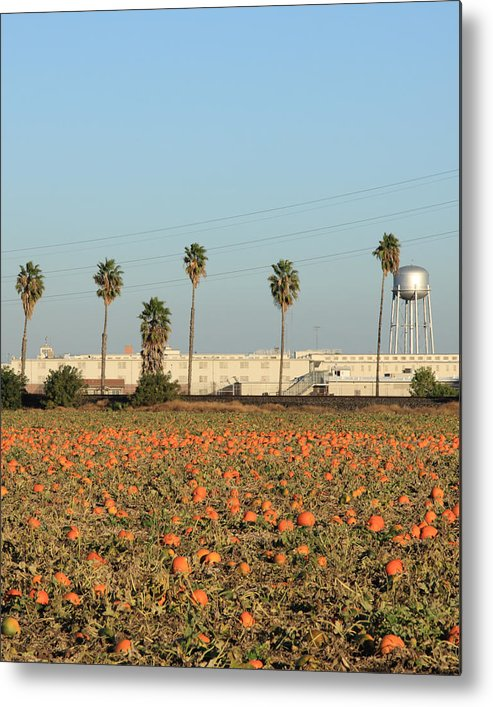 Agriculture Metal Print featuring the photograph Prison Pumpkin Patch by Troy Montemayor