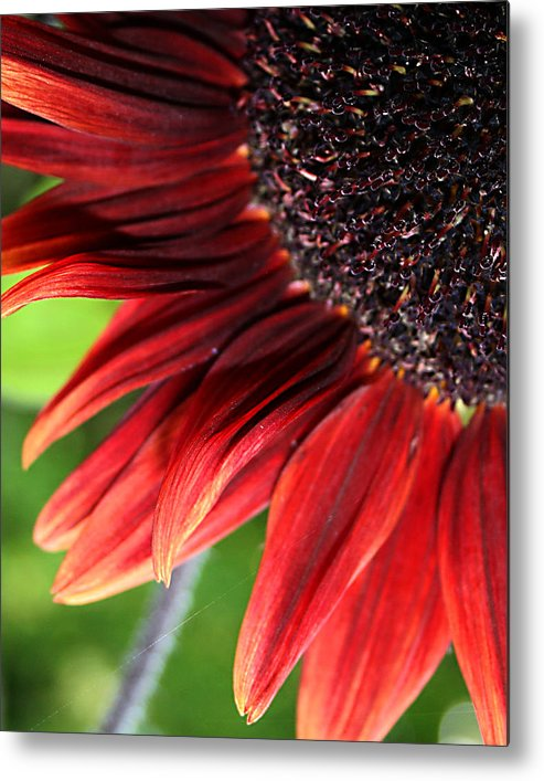 Red Metal Print featuring the photograph Sunflower by Carol Hicks