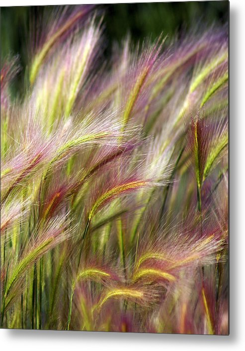 Plants Metal Print featuring the photograph Tall Grass by Marty Koch