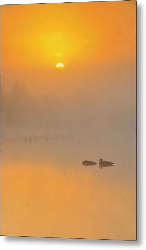 Aquatic Metal Print featuring the photograph Canadian Summer Landscape by Don Johnston