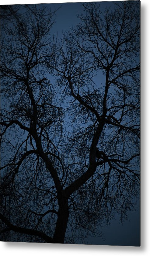 Blue Metal Print featuring the photograph Black Veined Sky by Loren Rye