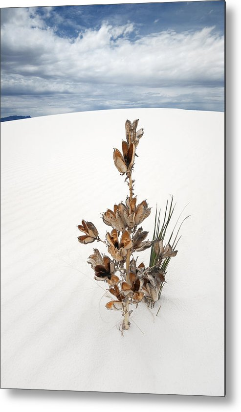 White Sands Metal Print featuring the photograph Solitude by Ryan Heffron