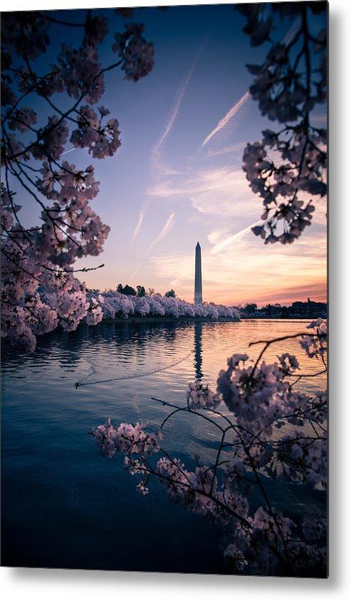 Metal Print featuring the photograph Dawn Blossoms by Joshua Lebenson
