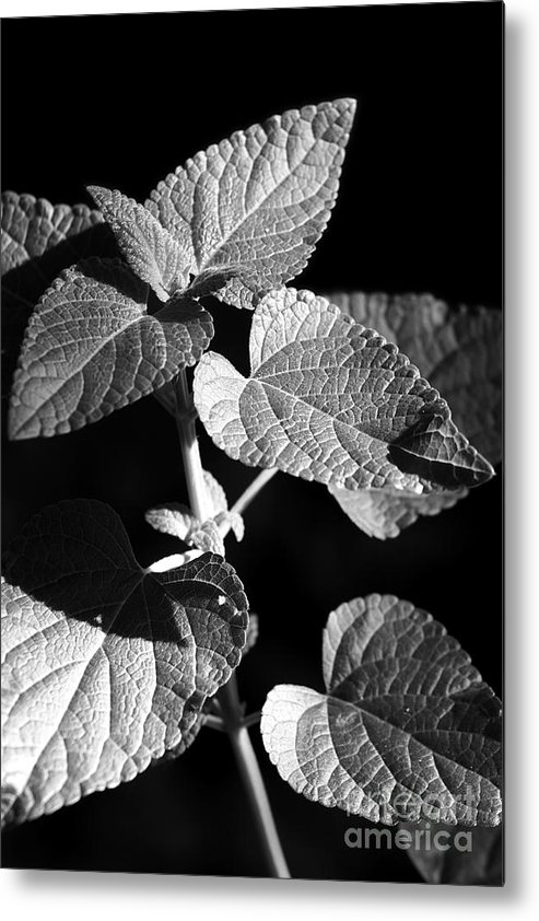Light Metal Print featuring the photograph Light And Shadow by Jeannie Burleson