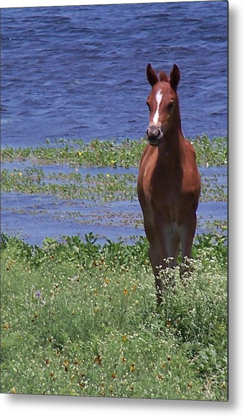 Horse Metal Print featuring the photograph Look At Me by Lilly King