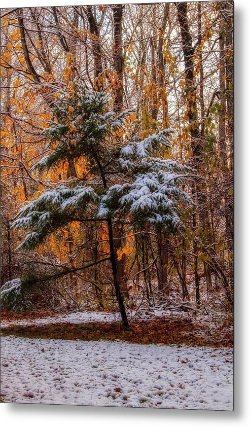 Autumn Metal Print featuring the photograph Mixed Seasons by Carolyn Odell