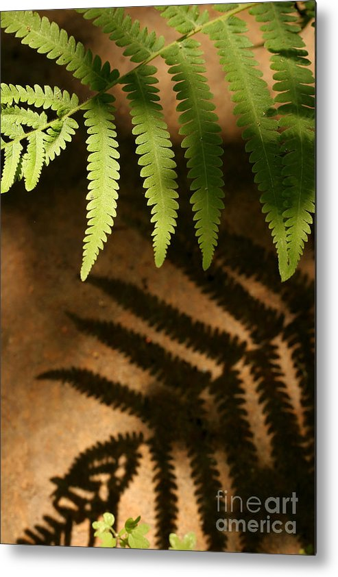 Fern Metal Print featuring the photograph My Shadow by Jeannie Burleson