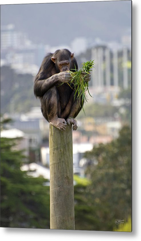 Zoo Metal Print featuring the photograph Urban Jungle by Andrea Cadwallader