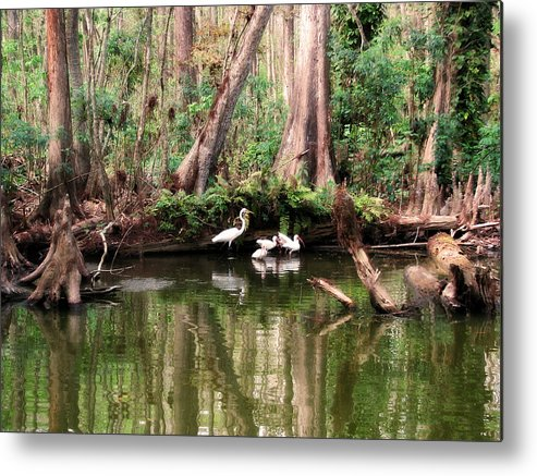 Nature Metal Print featuring the photograph Cypress Swamp by Peg Urban