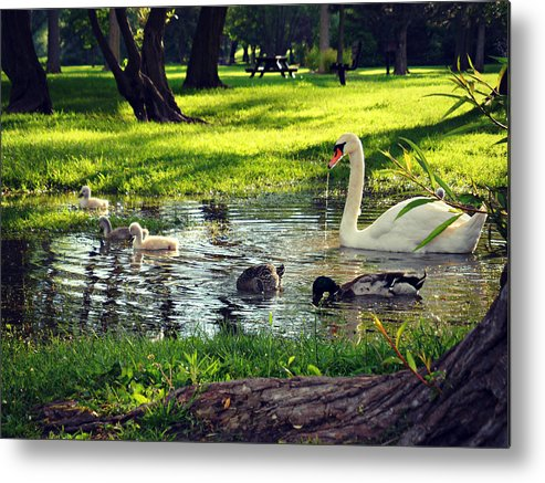 All In The Family Metal Print featuring the photograph All In The Family by Cyryn Fyrcyd