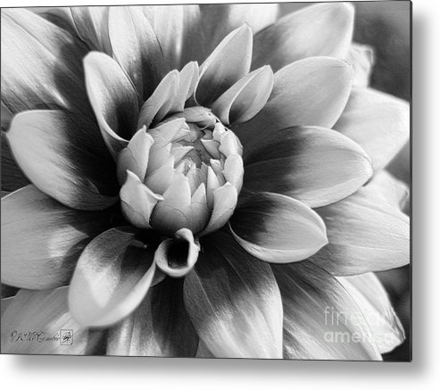Dahlia Metal Print featuring the digital art Dahlia Named Mystery Day by J McCombie