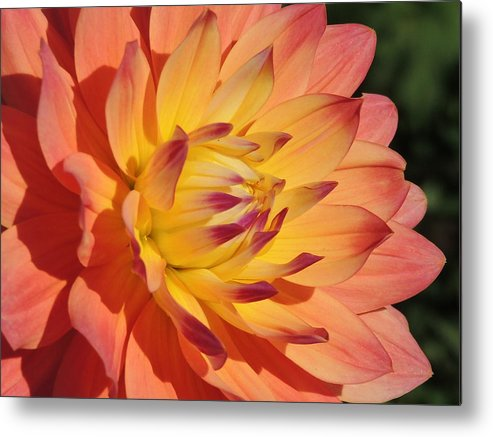 Nature Metal Print featuring the photograph For You by Lucy Howard