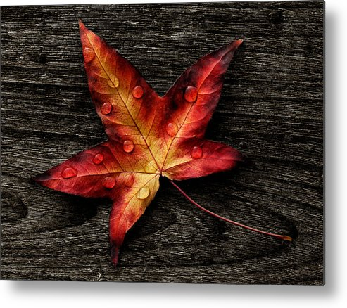 Autumn Metal Print featuring the photograph Leave by TouTouke A Y