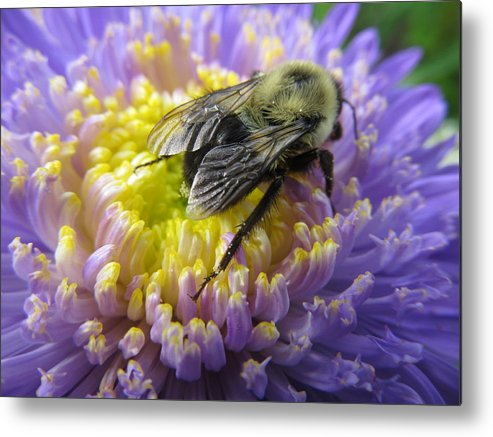 Bee Metal Print featuring the photograph Light Nectar by Zeitlin Giffen