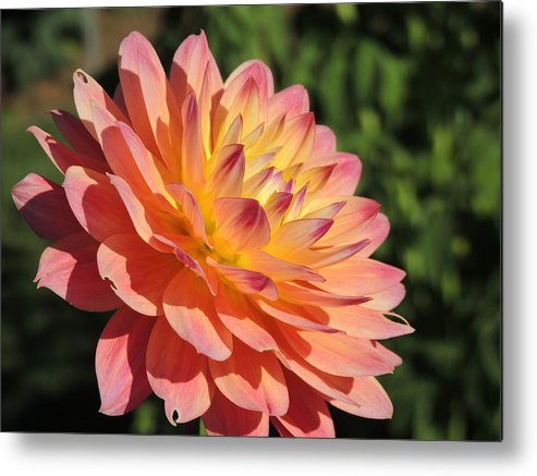 Nature Metal Print featuring the photograph Peach Day by Lucy Howard