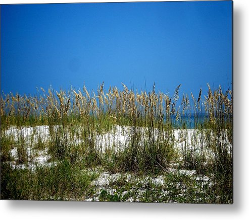 Florida National Seashore Metal Print featuring the photograph Sowing Wild Oats by Mary Marsh