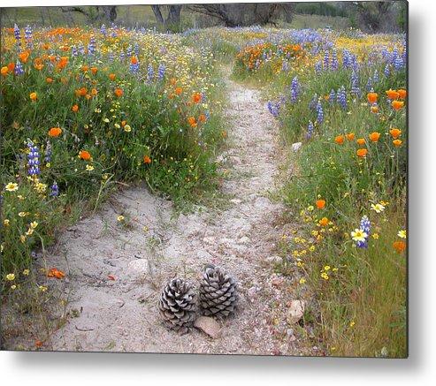Wildflowers Metal Print featuring the photograph Wildflower Wonderland 11 by Lynn Bauer