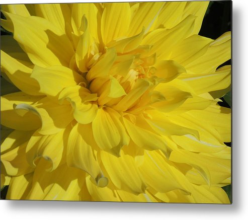 Nature Metal Print featuring the photograph Yellow Day by Lucy Howard