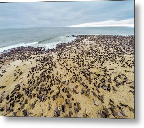 Namibia Metal Print featuring the photograph Cape Cross, Namibia, Africa - Cape Fur by Edwin Remsberg