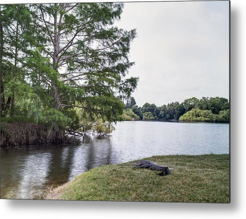 Up Metal Print featuring the photograph Gator by William Ragan