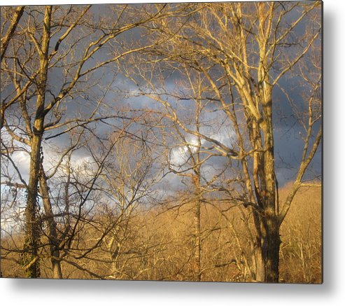 Country Metal Print featuring the photograph God Made Trees by Natacha Nyema