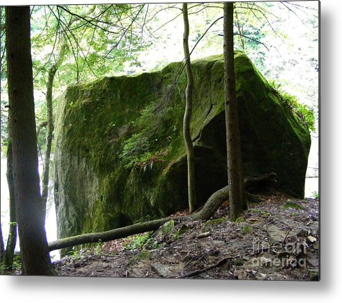 Photograph Metal Print featuring the photograph Green Giant by Nancy Kane Chapman