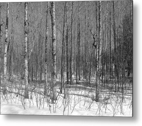 Black & White Metal Print featuring the photograph Into The Woods by Gene Cyr