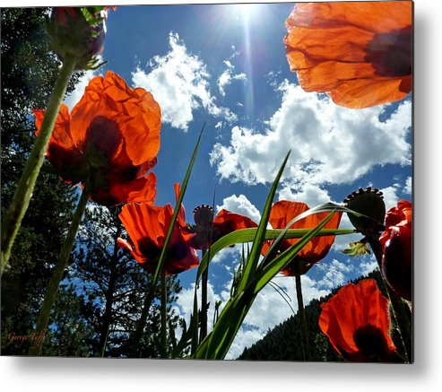 Red White And Blue Metal Print featuring the photograph Red White And Blue by George Tuffy
