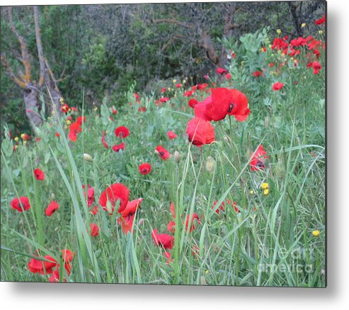 Flowers Metal Print featuring the photograph Italy by Tiffany Reine