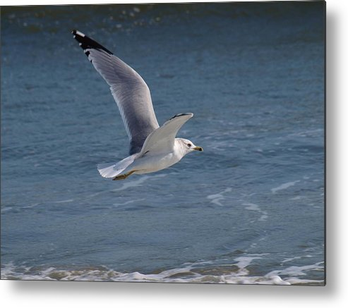 Birds Metal Print featuring the photograph Flight by Jeffrey Akerson