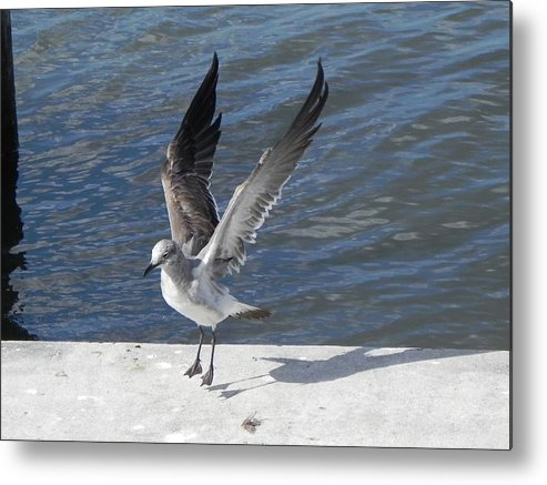 Seagull Metal Print featuring the photograph A Firm Landing by Cynthia N Couch