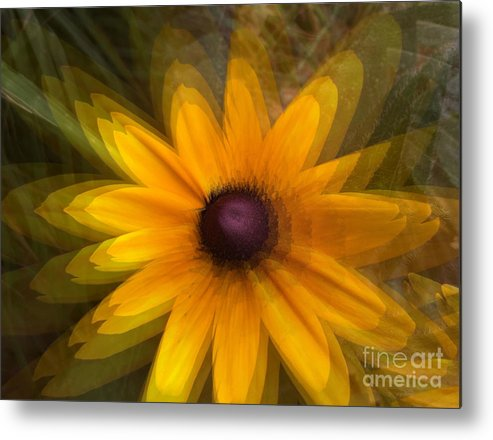 Photograph Flower Metal Print featuring the photograph A Star Flower by Gayle Price Thomas