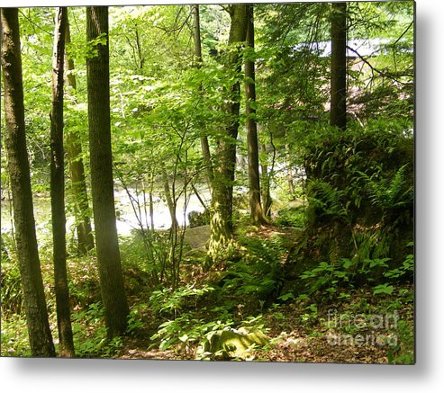 A Hike In The Pennsylvania Woods Near A Stream And Just Through The Metal Print featuring the photograph A Woodland Trail by Nancy Kane Chapman