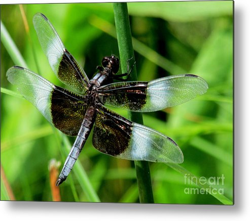 Dragon Fly Metal Print featuring the photograph Aep352a by Scott B Bennett