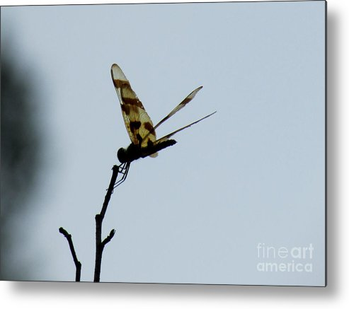 Dragon Fly Metal Print featuring the photograph Aep525a by Scott B Bennett
