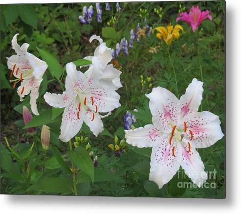 Flowrs Metal Print featuring the photograph All In White by Brenda Ketch