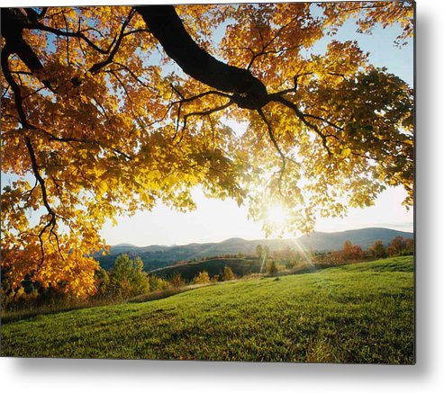Macro Metal Print featuring the photograph Sunset Over The Hill. by Dave Byrne