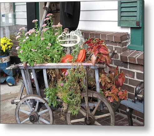 Antique Metal Print featuring the photograph Antique Goat Cart by Barbara McDevitt