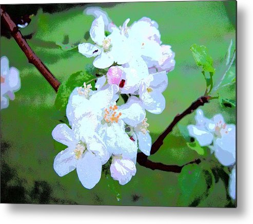 Apple Blossoms In The Spring Metal Print featuring the photograph Apple Blossoms In The Spring - Painting Like by James Scott Preston