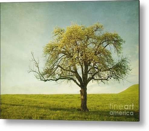Appletree Metal Print featuring the photograph Appletree by Priska Wettstein