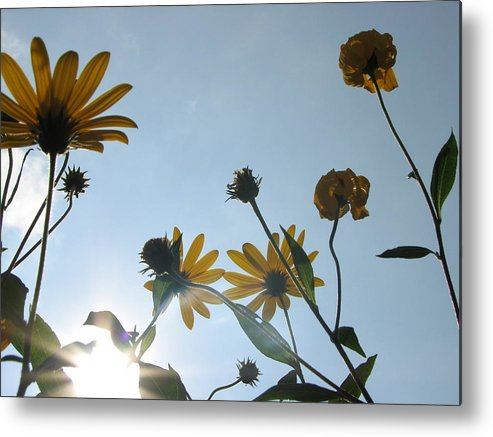 Reach Metal Print featuring the photograph Arise by Sue Thomson