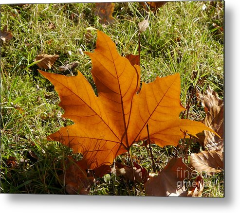 Maple Metal Print featuring the photograph Autumn Flag by Christiane Schulze Art And Photography