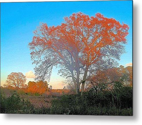 Nature Metal Print featuring the photograph Autumn In Georgia by James Potts