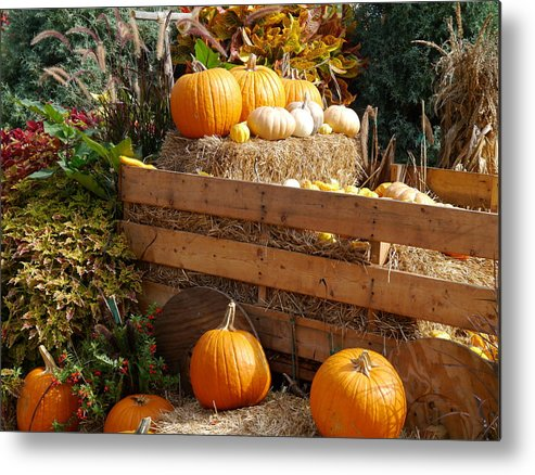 Harvest Metal Print featuring the photograph Autumntime Pumpkintime by Christiane Schulze Art And Photography