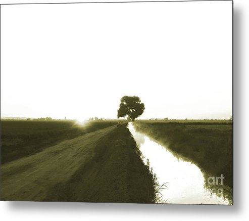 Tree Metal Print featuring the photograph Awaken To A New Day by Cheryl Wood