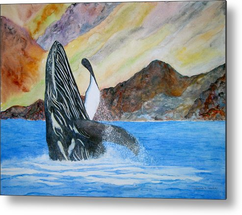 Humpback Whale Metal Print featuring the painting Baja Breach by Patricia Beebe